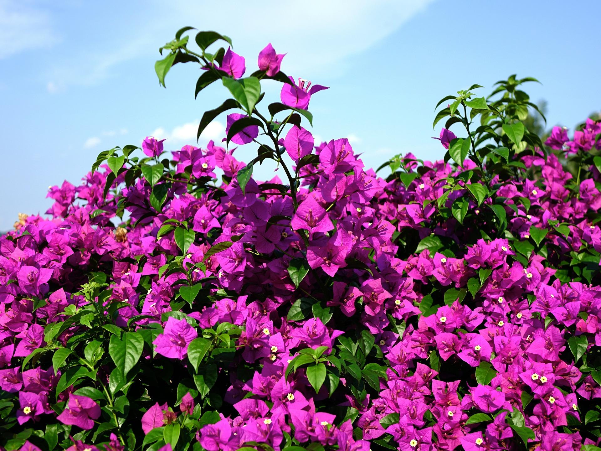 how to prepare your garden for the winter season georginajulia